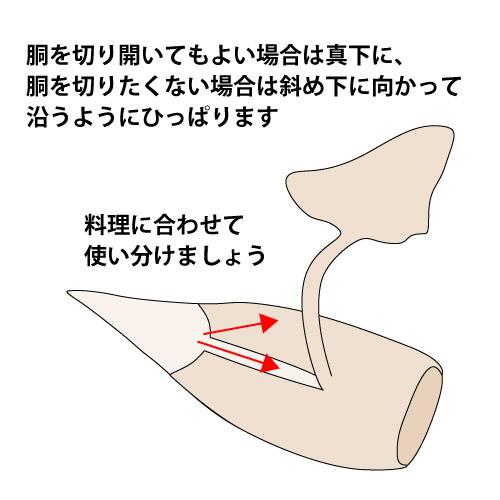胴体を押さえながらえんぺらを足の方向にむかって皮ごと剥がします。真下にひくと胴が切れることがあるので、筒状を生かした料理の時は斜め下に沿うように皮を剥ぎます。